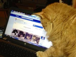 cat_and_facebook