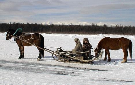 Pferde Baikalsee
