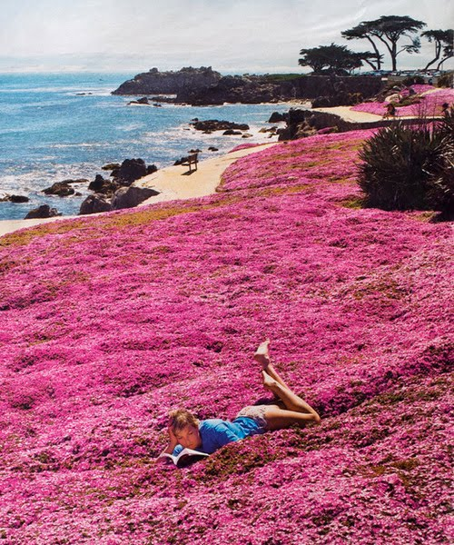 Seaside Park, Monterey, California
