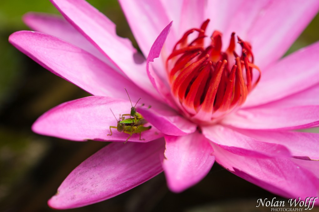 Grasshopper romance (454F18884)