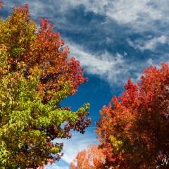 Autumn leaves (454F20547)