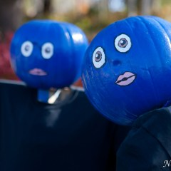 Blue Man pumpkins (454F9023)