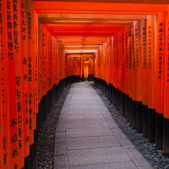 Torii at Fushimi Inari Shrine (454F41201)