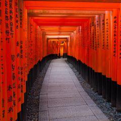 Torii at Fushimi Inari Shrine (454F41201)