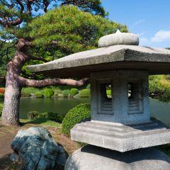Traditional Japanese garden (454F43642)