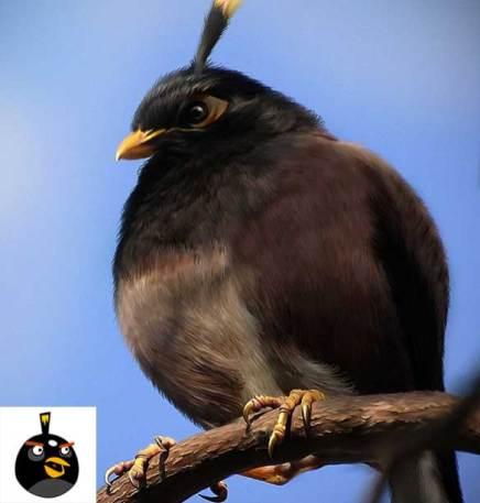 angry-birds-irl-concept-black-bird