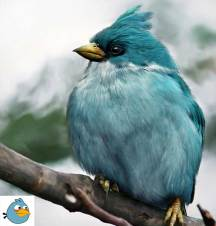 angry-birds-irl-concept-blue-bird