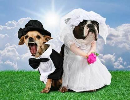 animales-casados-01