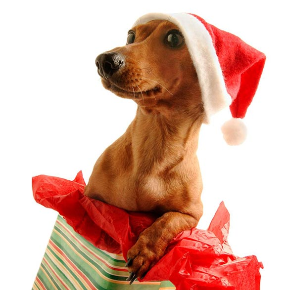 perro-santa-navidad-2012