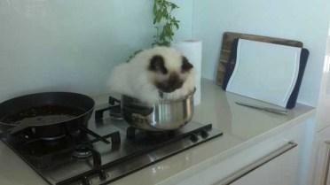 gatos-dia-de-accion-de-gracias-2013-05