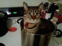 gatos-dia-de-accion-de-gracias-2013-08