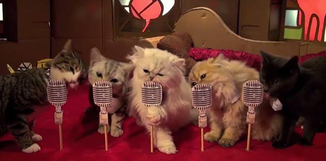 poopy-cat-dolls