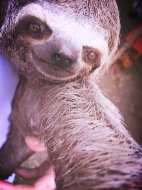 animal-selfie-01