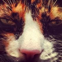 animal-selfie-09
