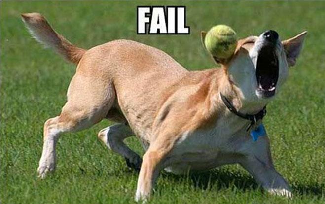 cuando-los-perros-fallan-la-atrapada