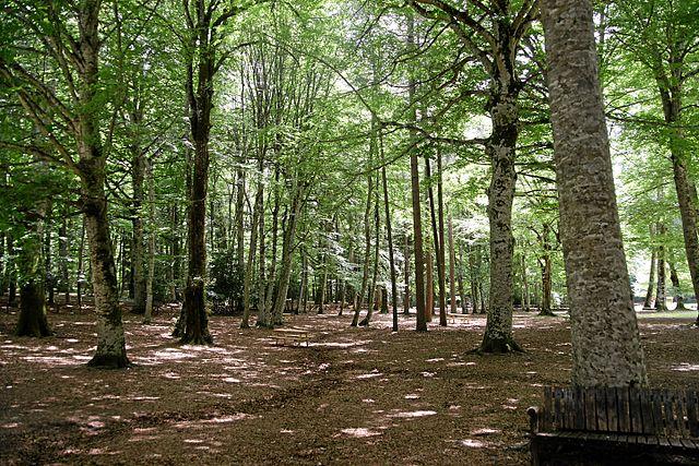 Le faggete della Foresta Umbra nel parco del Gargano in Puglia adesso è parte del patrimonio UNESCO