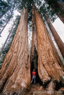parque nacional sequoia, national park sequoia-64