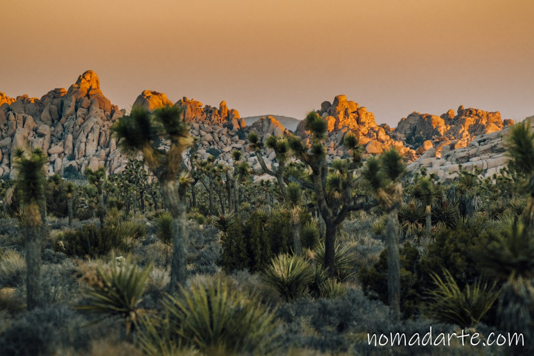 paisaje en joshua tree, desierto
