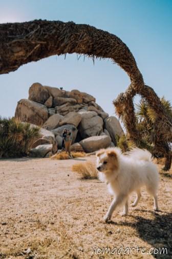 mascotas en joshua tree