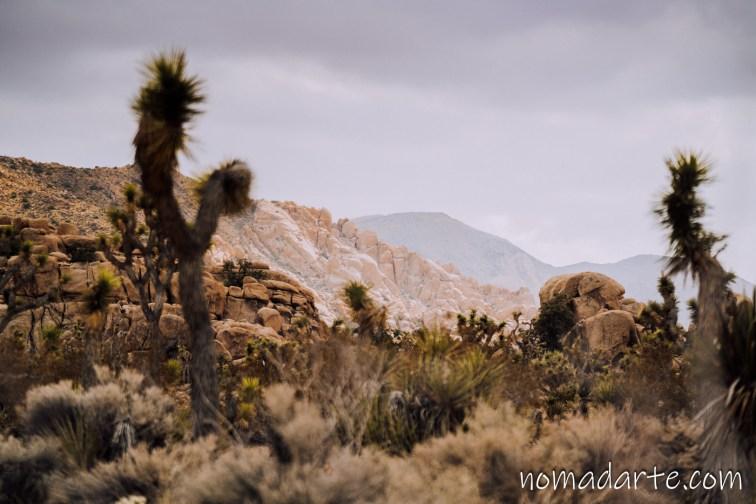 paisaje del desierto, arboles de josue