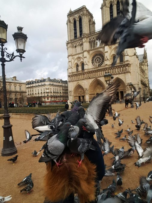 Birds outside of Notre Dame in Paris, France