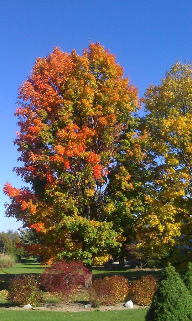 Fall foliage colors in Michigan