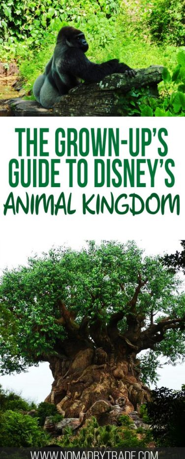 Disney World's Animal Kingdom Park is full of fantastic rides, animal encounters, and international inspired food. Adults will find plenty of ways to fill their day. Disney World | Disney parks | #DisneyWorld | #AnimalKingdom | #DisneyParks | What to do at Animal Kingdom | Adults at Disney World