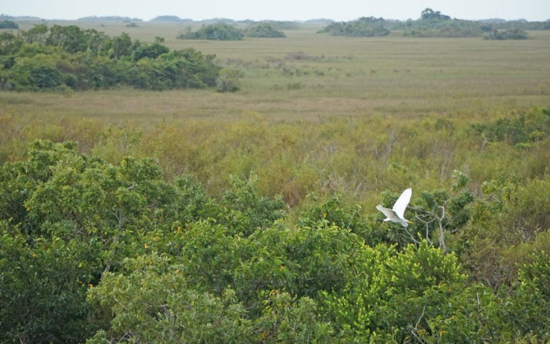 Go Wildlife Spotting on an Everglades Tram Tour
