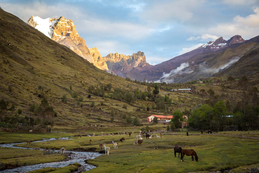 Horses grazing in a valley along one the Lares Trek, a great spot for trekking in Peru