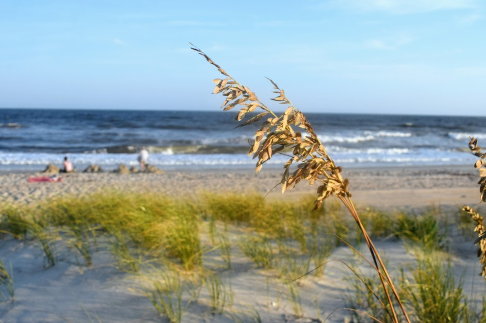 Grass on an island in the Outer Banks