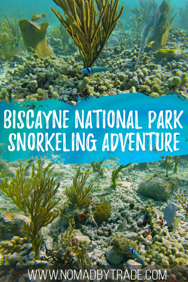"Collage of coral and fish with text overlay reading ""Biscayne National Park snorkeling adventure"""