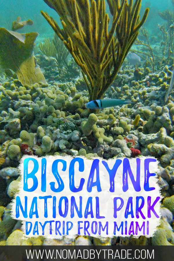 "Colorful fish and coral with text overlay reading ""Biscayne National Park daytrip from Miami"""