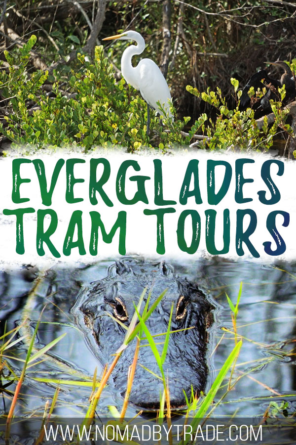 "Photos of wildlife with text overlay reading ""Everglades tram tours"""