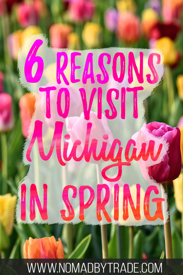 "Multi-colored tulips with text overlay reading ""6 reasons to visit Michigan in spring"""