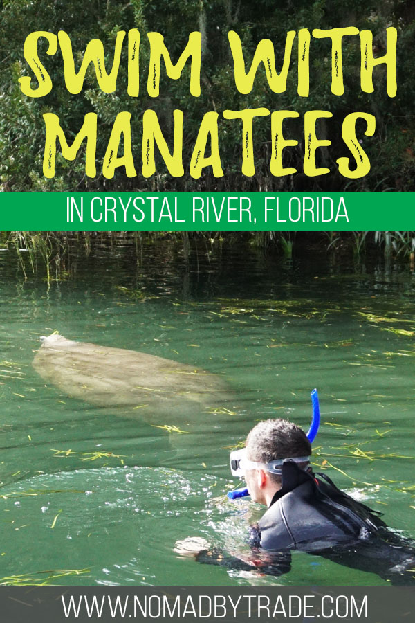 """Man swimming with a manatee with text overlay reading """"Swim with manatees in Crystal River, Florida"""""""