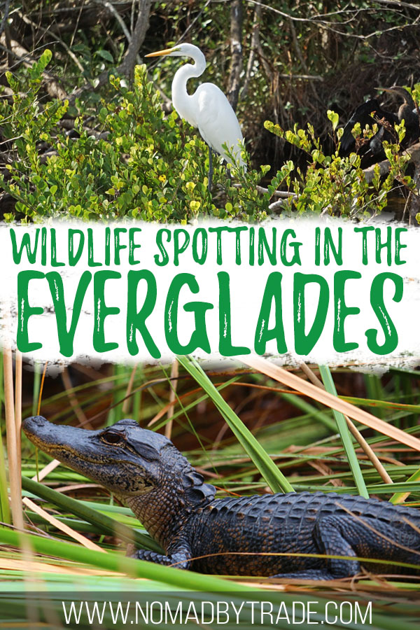 "Photos of wildlife with text overlay reading ""Wildlife spotting in the Everglades"""