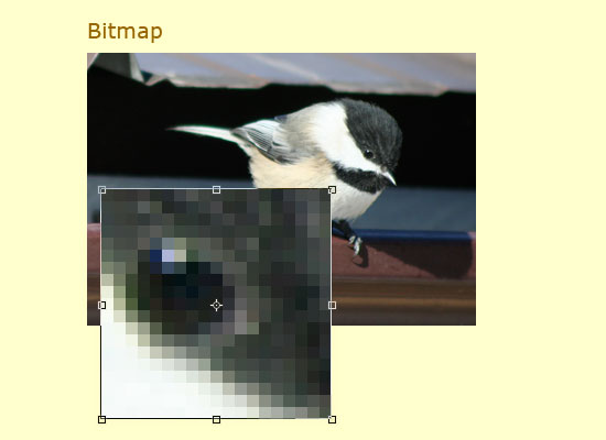 Bitmap Vs. Vector Based Images: What's the Diff Bro ...