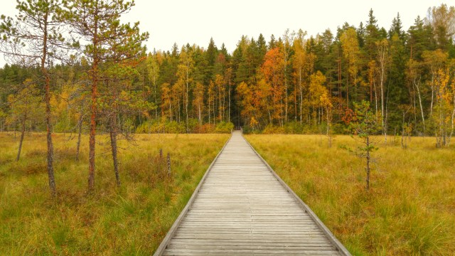 Kurjenrahka National Park lies just outside Turku city limits.