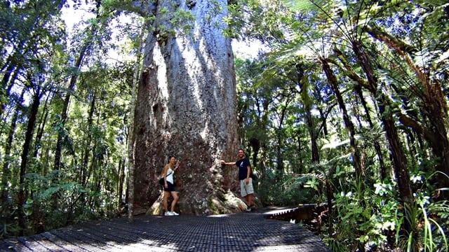 Pán lesa - kauri strom Tāne Mahuta