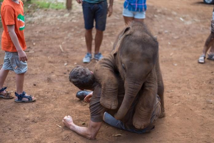 thailand, chiang mai, patara elephant farm, elephant, baby