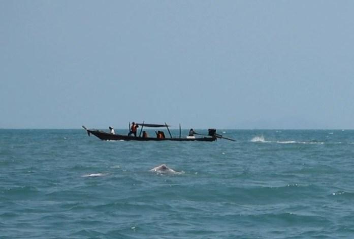 thailand, don sak, surat thani, boat ride, sea, pink dolphin