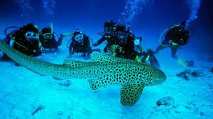 Adventure Sports in Andaman Nicobar Islands - scuba diving, andaman nicobar islands