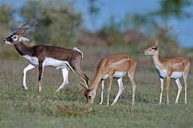 It's among top in the list of places to visit in Bikaner. - Gajner Wildlife Sanctuary