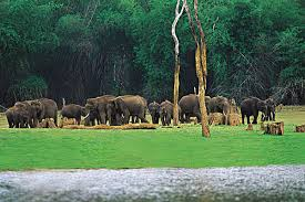 Tourist Places to Visit near Kochi (Cochin) Periyar Wild life sanctuary