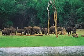 Tourist Places to Visit near Kochi (Cochin) Periyar Wild life sanctuary