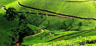 Tourist Places to visit in Ooty