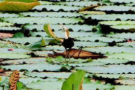 Tourist Places to visit in Pondicherry - Ousteri Wetland and National Park