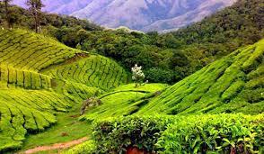 Tourist Places to visit in Araku valley - Coffee Plantation
