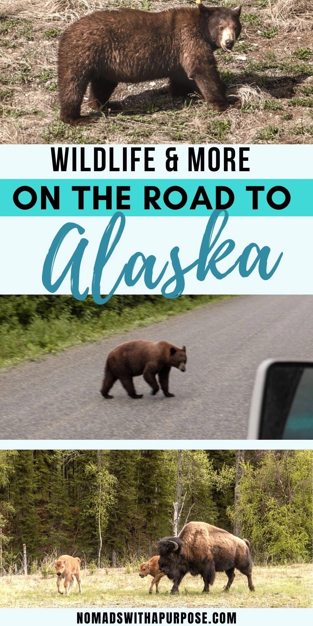 Alaska Highway Wildlife Pin