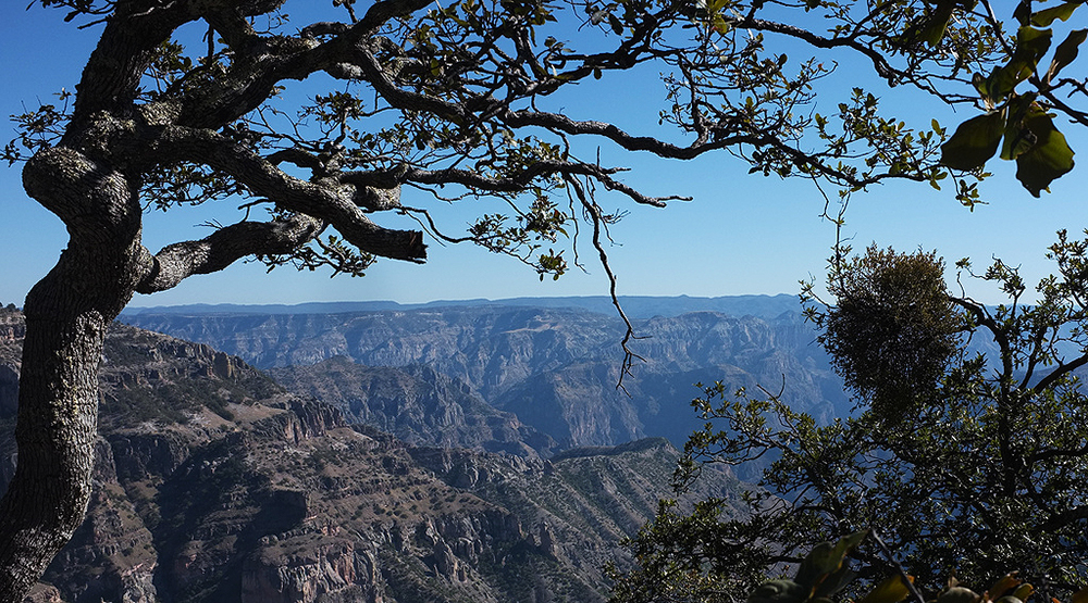 View of the Copper Canyon of Mexico